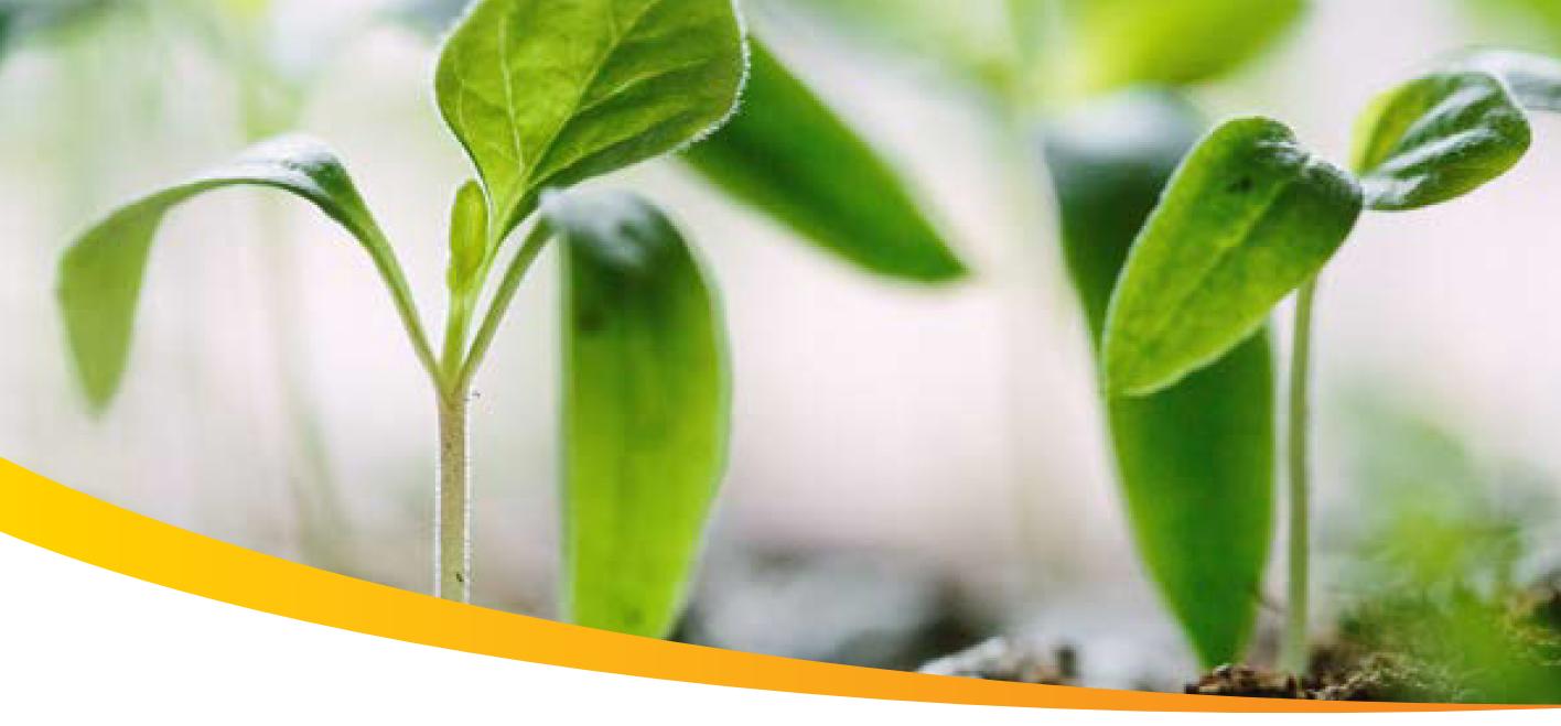 Plan, Plant, Propagate-Permaculture